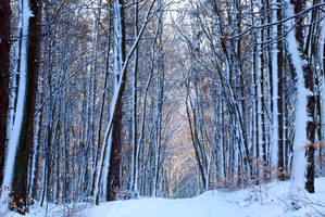 winter forest I by Wilithin