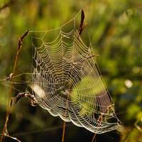 spiderweb fair IV by Wilithin