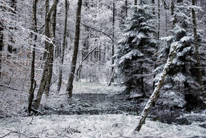 winter forest II by Wilithin