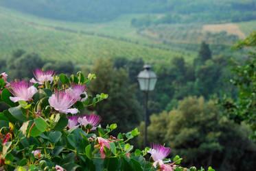 Tuscany I by Wilithin