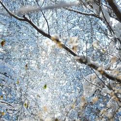 colours of Winter VI by Wilithin