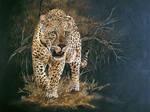 The Predator by donaldsart