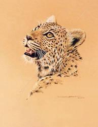 Leopard cub - untitled by donaldsart