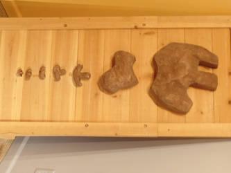Stego footprint sizes by Scholarly-Cimmerian