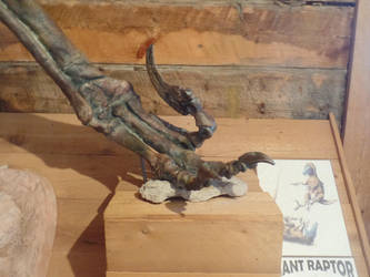 Morrison Museum: Utahraptor claw by Scholarly-Cimmerian
