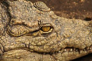 Crocodile at Rest by Fail-Avenger