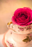 .:: China Rose ::. by Whimsical-Dreams
