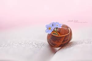 .:: New Beginnings ::. by Whimsical-Dreams