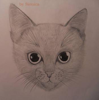 Cat by Amberheaf