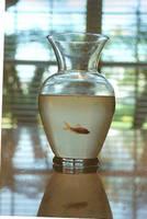 Fishbowl by Soyismyhomeboy