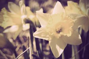 en blomma by Permlid