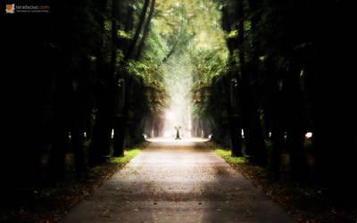Wild forest by Taradaciuc
