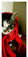 Little red riding hood by beethy