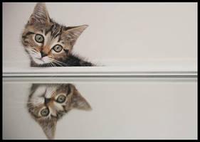 mirrored kitten by beethy