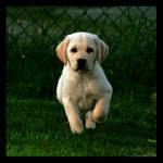 'kvadrat series: Puppy by nightwibe