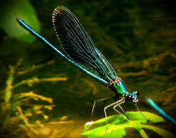 Dragonfly II by IntelleCtualErrOr