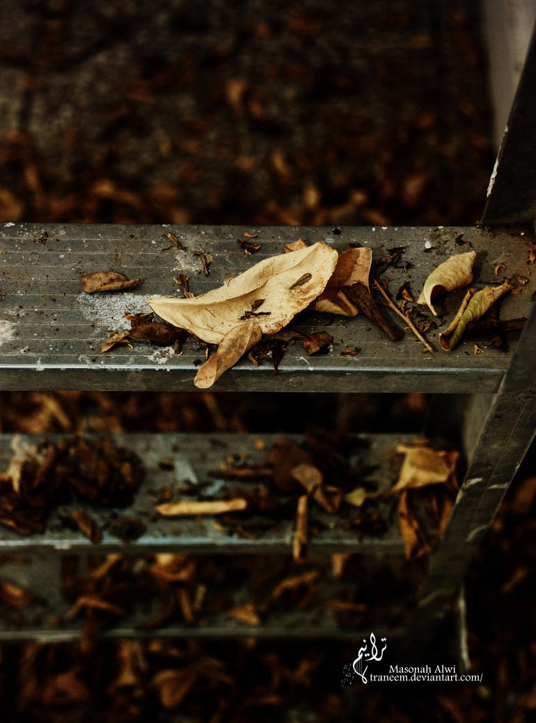 Autumnal leaves by Traneem