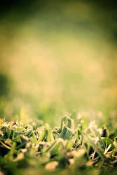 meadow. by hot-cake-joy