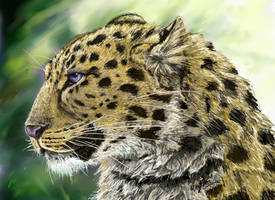 Amur leopard by SilverFlight