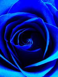 Rose Blue by Sealana