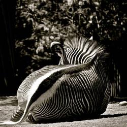 Stripes by MiniWookie