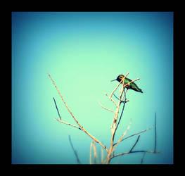 Hummingbird by MiniWookie