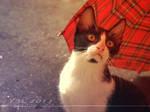 a cat's interest in umbrella 07 by ariellemika12