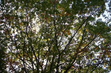 Canopy by tsukiyuuki