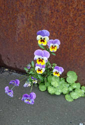 Little Flower Faces by Siiw