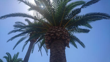 Palme by Siiw