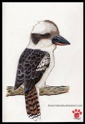 Inktober Day 7- Kookaburra by ImmortalPanda