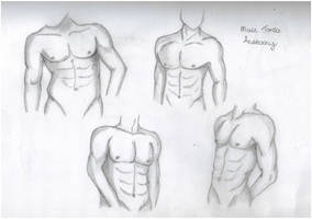 Male Torso Practice by lawlaw06