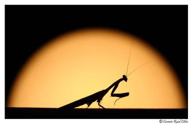 Thassos Mantis by calincosmin