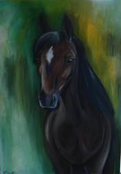 dark horse by windinthehair