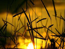 Shiny Grass by LyraWhite