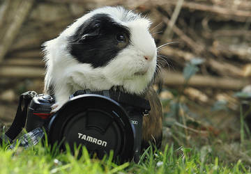 Little Photographer by Fall-of-rain