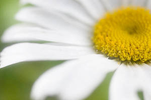 flower. by depairfactor