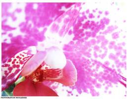 Phalaenopsis series 1 by depairfactor