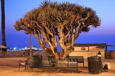 Ocean tree by notroot