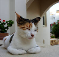 Millie's Contentment by Ithfifi
