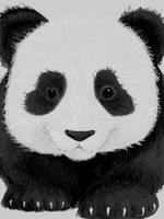 +panda+ by nayruasukei