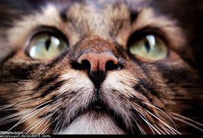 meow by Enijoi