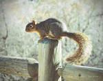 I Found a Squirrel! :) by BroadwayBound23
