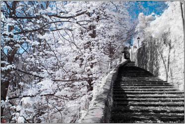 winter trees and summer steps by monkeyheadmushroom