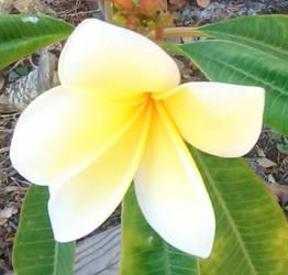 Lei Flower by JAV1966