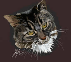 MinnieCat by RedSaucers