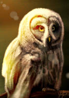 Owl by RedSaucers