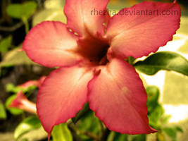 the flower by rhezha