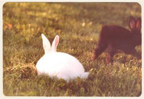 bunnies by kyylie