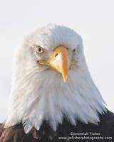 Eagle Eye by JWFisher
